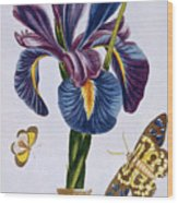 Common Iris With Butterflies Wood Print