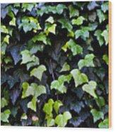 Common Ivy Wood Print