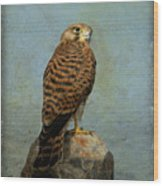 Common Kestrel Wood Print