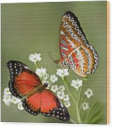 Common Lacewing Butterfly Wood Print by Thanh Thuy Nguyen