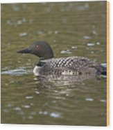 Common Loon Wood Print