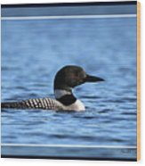 Common Loon, Framed Wood Print