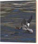 Common Merganser Duck Wood Print