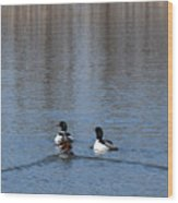 Common Merganser Wood Print