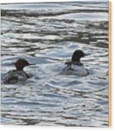 Common Merganzer Pair Wood Print