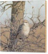 Common Mockingbird Wood Print