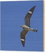 Common Nighthawk Wood Print