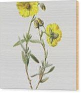 Common Rock Rose Wood Print
