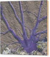 Common Sea Fan On Grecian Rocks In Key Largo Fl Wood Print