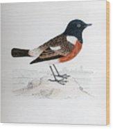 Common Stonechat Illustration Wood Print