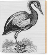 Common Stork Wood Print