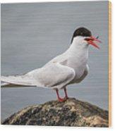 Common Tern Wood Print