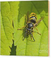 Common Wasp Wood Print