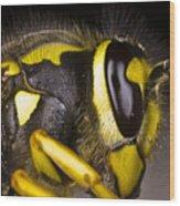 Common Wasp Vespula Vulgaris Close-up Wood Print
