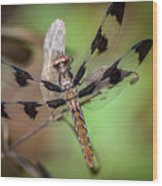 Common Whitetail Dragonfly Wood Print