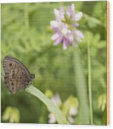 Common Wood-nymph 2013-1 Wood Print