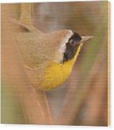 Common Yellow-throat In Hiding Wood Print