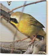 Common Yellowthroat #2 Wood Print