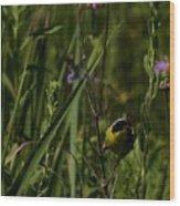 Common Yellow Throat Wood Print