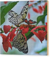 Community Flowers Wood Print