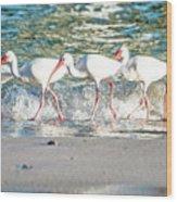 Companions On Coquina Beach Wood Print