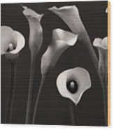Composition With Calla Lily Wood Print