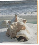 Conch Shell In Snow Wood Print