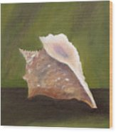 Conch Shell Wood Print by Shirley Lawing