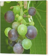 Concord Grapes On The Vine Wood Print