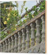 Concrete Banister And Plants Wood Print