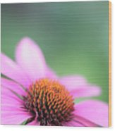 Cone Flower 2 Wood Print