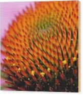 Cone Flower Closeup Wood Print