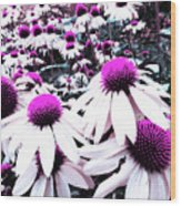 Cone Flower Delight Wood Print by Kevyn Bashore