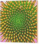 Cone Flower Wood Print