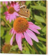 Cone Flower Visitor Wood Print