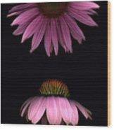 Cone Flowers Wood Print