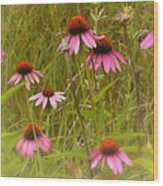 Cone Flowers In The Meadow Wood Print