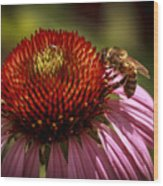 Coneflower Bee Wood Print
