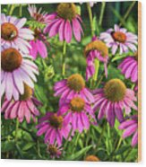 Coneflower Garden Wood Print