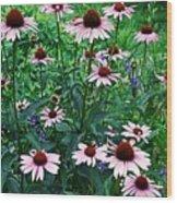 Coneflower Garden Wood Print