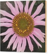 Coneflower In The Pink Wood Print