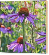Coneflower Pedals Wood Print