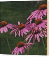 Coneflower Spray Wood Print