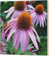 Three Coneflowers  Wood Print