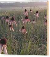 Coneflowers At Dawn Wood Print