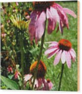 Coneflowers In Garden Wood Print