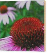Coneflowers Wood Print by Juergen Roth