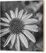 Conehead Daisy In Black And White Wood Print