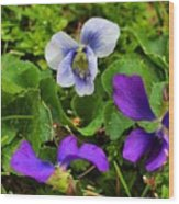 Confederate And Purple-blue Violets Wood Print