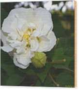 Confederate Rose Wood Print